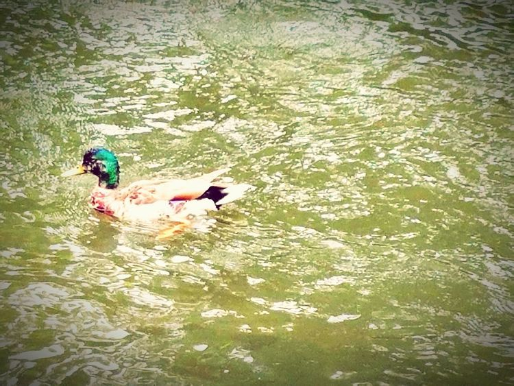 Nature Walking Enjoying The Sights Duck Taking Photos Check This Out