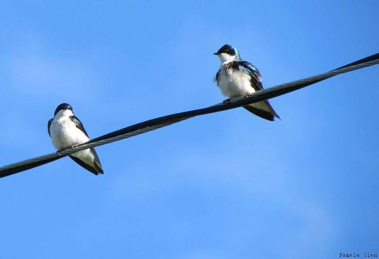 Bird Photography Birdonawire Flyaway Free Wild Eye Em Market Sparrow Nova Scotia Colors Nature Metallic Birds Novascotia