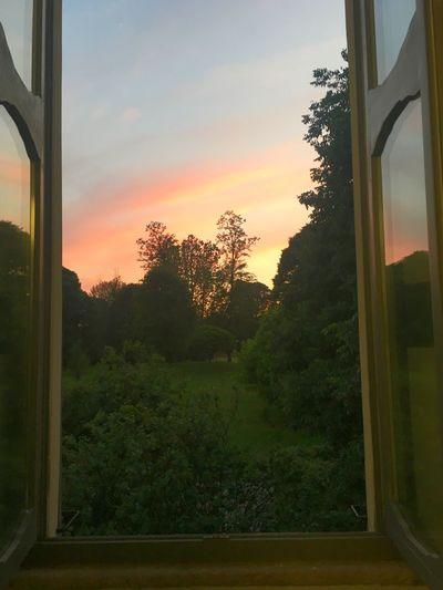 Vorrei portarti piú in alto, piú su delle nuvole. Tree Sky Sunset Plant Window Nature Glass - Material