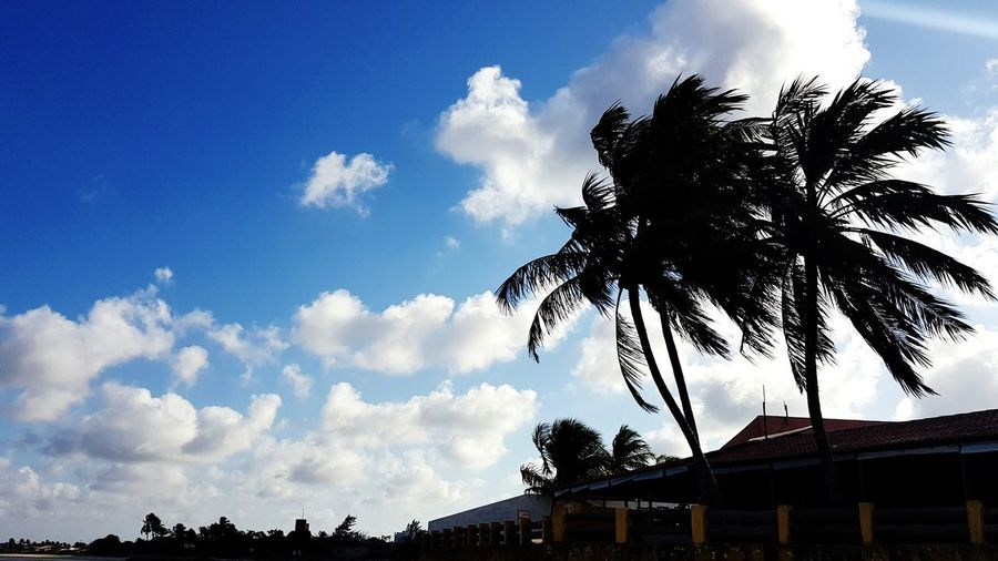 Low angle view of silhouette coconut palm trees against sky