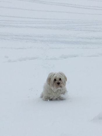 Dog One Animal Pets Snow White Color Winter Domestic Animals Cold Temperature Animal Themes Sitting Mammal No People Nature Outdoors Day