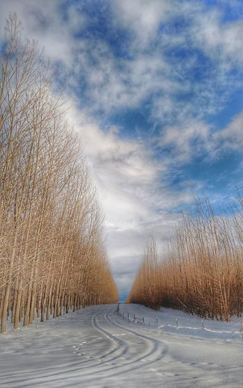 Between and Beyond... Snow Northidaho Chasinglight Coeur D'Alene JustIdaho Winter Ihavethisthingwithtrees Trees And Sky Trees Landscape Tuesday
