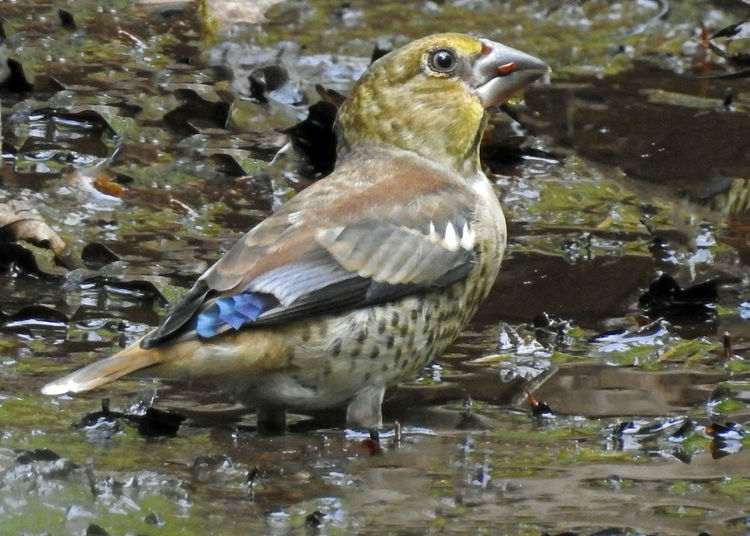 Animal Themes Animal Wildlife Animals In The Wild Bird Kruisbek One Animal Water Waterfront Wet