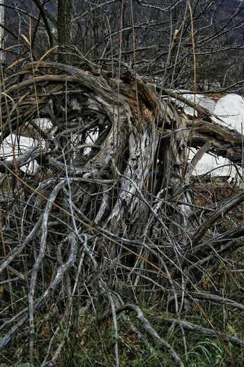 Trees Roots Broken