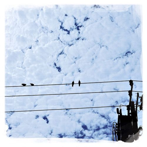 birds on the wire Sky Hipstamatic Cloud - Sky Outdoors Bangkok Clouds And Sky Cable Adapted To The City