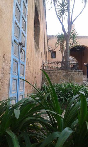 Doors Lover EyeEm EyeEm Gallery Tree Leaf Just Taking Pictures Day Morocco Door No People No Edit/no Filter Morocco Rabat Morocco 🇲🇦
