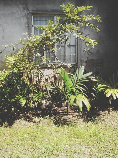 Thy backyard looks pretty scary. Tsk tsk ?
