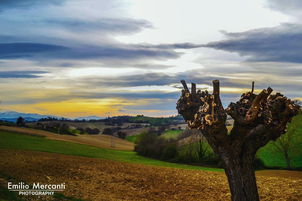 sky, field, landscape, nature, cloud - sky, no people, tranquility, outdoors, scenics, growth, tree, day, beauty in nature