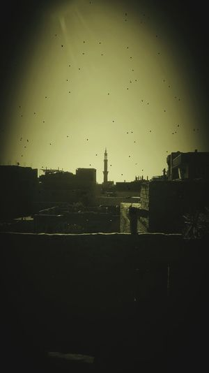 Surface of houses and memories Flying Silhouette Bird Sky No People Flock Of Birds Outdoors