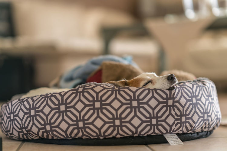 Close-up of dog sleeping on pet bed at home