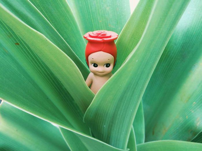 เขียว-แดง Leaf Green Color Red No People Outdoors Close-up Sonny Angel Doll Toy Children Love Collection Hobby Kewpiedoll Figure Mini Figure Rose - Flower Bangkok Thailand Garden Park Childhood Playing Background Abstract Mix Yourself A Good Time