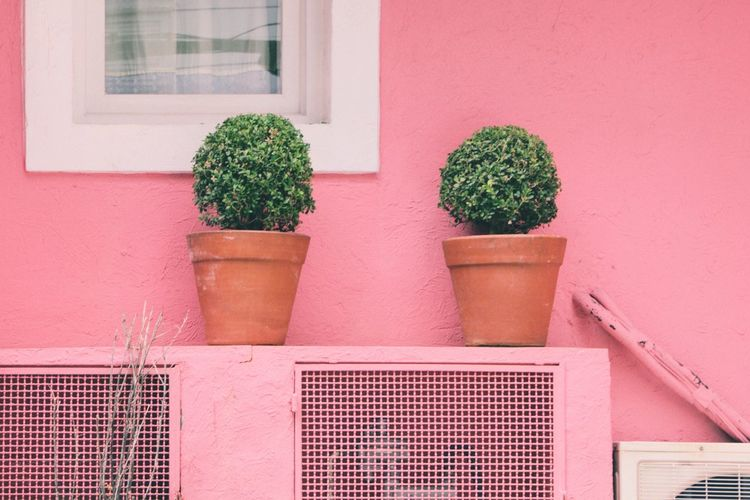 Lines And Shapes Pink Color Colorful Vase House Geometric Shape Simplicity Potted Plant Plant Architecture Window Building Exterior Built Structure No People Day Outdoors Window Box Nature Creative Space