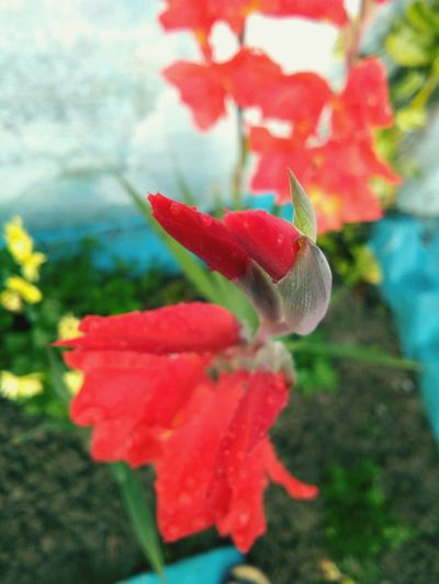 Good thing..... Flower Nature Plant Petal Red Beauty In Nature Flower Head Focus On Foreground Growth Day Freshness Poppy Leaf Blooming Hibiscus No People Close-up Fragility Kdwithyou. Bolgspot. Com India KDphotography Love The Photojournalist - 2017 EyeEm Awards The Portraitist - 2017 EyeEm Awards The Great Outdoors - 2017 EyeEm Awards The Street Photographer - 2017 EyeEm Awards The Architect - 2017 EyeEm Awards Break The Mold EyeEmNewHere Pet Portraits The Week On EyeEm