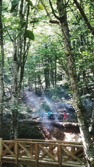 Işık, sadece ağaçların arasından süzüldüğü kadarıyla düşmese de tümden üzerimize yansıtsa kendini; mutsuzluk, hüzün, kötülük, yalan, karanlık nedir bilmesek.. İyiliğin, iyilerin tamamen saracağına tüm çevremizi ve aydınlığa kavusacağımıza daha çok inanabilsek... Dupnisa Magaralari Mothernature EyeEm Nature Lover Eye4photography  Ineedamiracleformylostsoul Nature Autumn Landscape Great Outdoors Peace And Quiet