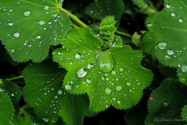 Raindrops… Water Drop Green Color Close-up Macro Photography Canonphotography