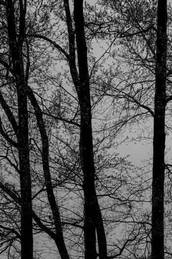 Low angle view of silhouette bare trees in forest against sky