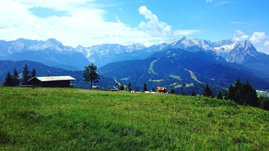 Garmisch-Partenkirchen, Germany 2016 Brown Cow Alps Mountain Cottage Green Cow Cows Sky Plant Mountain Cloud - Sky Beauty In Nature Scenics - Nature Tree