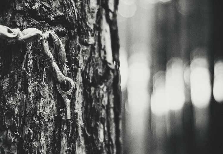 Bw Keys Tree Forest Wooden Beauty In Nature Bw_collection Bw_lover BW_photography Blackandwhite Photooftheday Focus Black And White Bokeh Photography Bokeh Phptography Great Akcent Nature_collection Nature Photography Curtain Drapes  Full Frame Backgrounds Window Close-up Frosted Glass Flushing Toilet Street Art Mural