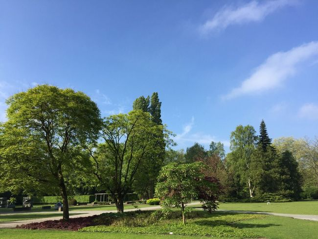 Tree Nature Growth Sky Tranquility No People Grass Beauty In Nature Landscape Blue Sky Outdoors Day Springtime Nature Photography IPhone Photography Outdoor Photography Park Green Color Spring Blue Grass Sunlight Green Nature Green Grass 🌱 Green Colours