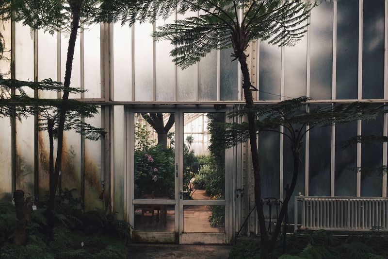 Trees Growing In Greenhouse Seen Through Glass Window