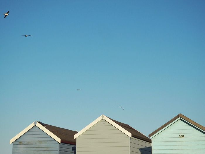 Low angle view of seagulls flying over beach huts against clear sky