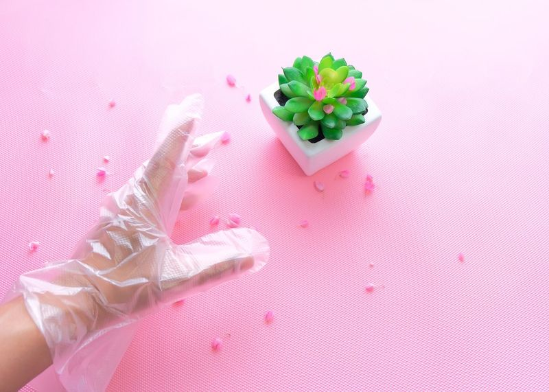 protection against falling in love Plant Safety First! Danger Beauty Prevent Protection Gloves Pink Color Indoors  No People Sweet Food Close-up Food Freshness