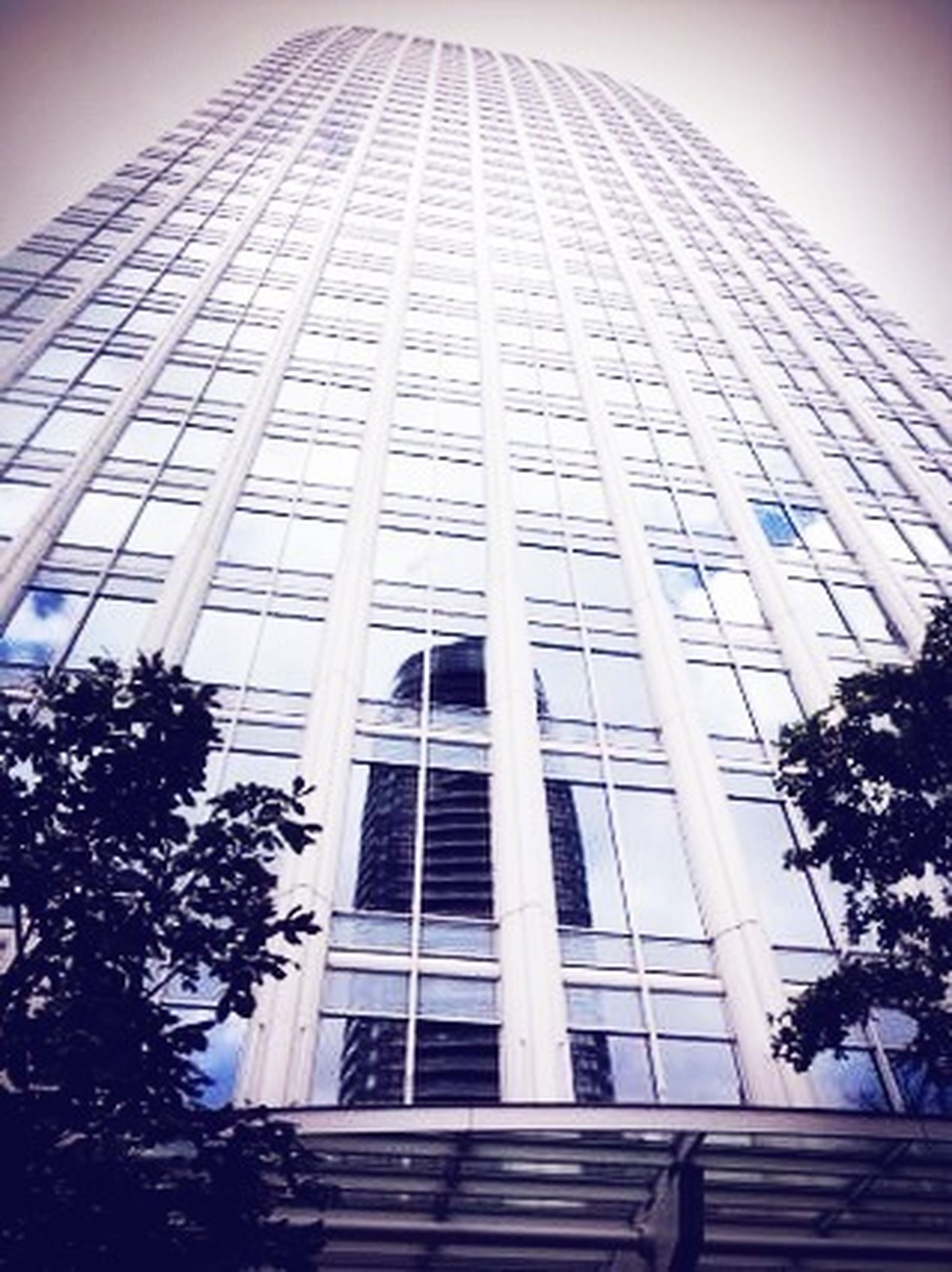 architecture, building exterior, built structure, low angle view, modern, office building, city, glass - material, window, building, tall - high, tree, tower, sky, skyscraper, reflection, day, facade, outdoors, clear sky