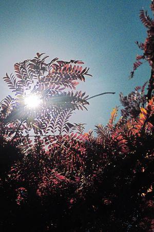 Nature Nature_collection Nature Photography Fall Fall Colors Fall Beauty Nature On Your Doorstep Naturelovers Sun Sunlight ☀ Sunlight