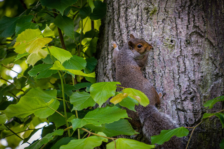 Squirrel on tree trunk in forest