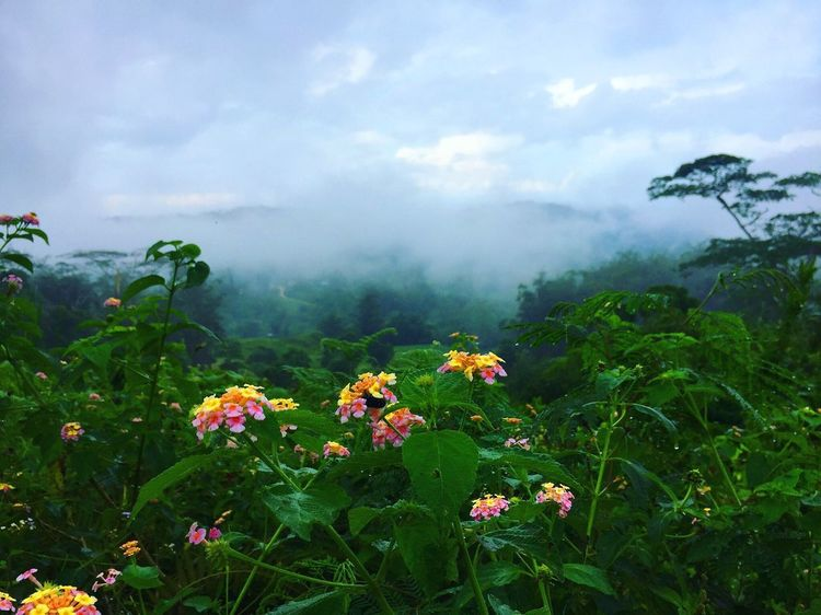 Nature Flower Plant Growth Beauty In Nature Day Outdoors Cloud - Sky Fog Freshness Sky Scenics Landscape Green Color Blooming Flower Head Scenery Tourism Relaxation Travel Destinations Blue Sky Mountain Range Mountain Osmeña Peak