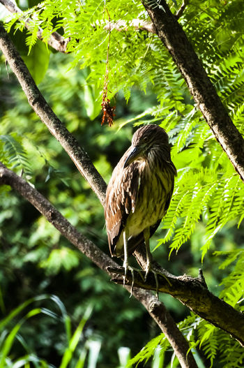 Animals In The Wild Perching Green Color Low Angle View Bird Of Prey One Animal Vertebrate Animal Focus On Foreground Plant Branch Animal Wildlife Day No People Bird Zoology Tree Animal Themes Nature Outdoors Eagle