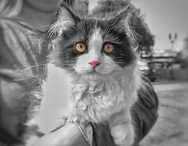 Domestic Cat Feline Mammal Animal Themes Pets Domestic Animals One Animal Portrait Outdoors Human Hand Close-up Day Pet Portraits