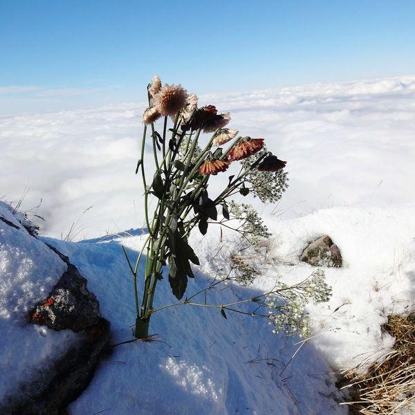Himmel und Erde gehören zusammen. Flower Autum Skys Sky And Clouds Snow Abgrund Mountain View Pilatus Miles Away Gebirge Alpenblumen Schweizer Alpen Perspective Clouds And Earth BYOPaper! Perspectives On Nature Capture Tomorrow