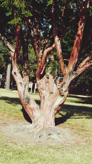 Tree No People Nature Growth Outdoors Summer 2016 Natural Beauty Beauty In Nature Authentic Moments Landscape Nature Tree Tree Of Life TreePorn Tree_collection  Treescollection Tree