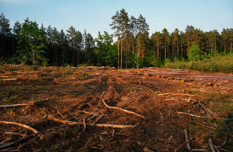 Beauty In Nature Block Clogs Cutting Cutting Trees Deforestation Deforestation Effect Deforestration Environment Environmental Damage Environmental Issues Forest Log Logs Nature Nature No People No People, Outdoors Timber Tree Tree Tree Trunk WoodLand