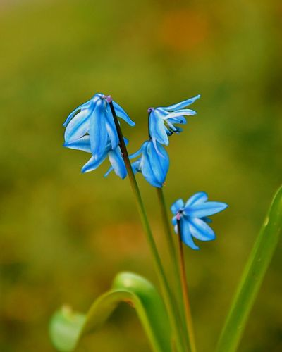 Flower Flower Head Blue Insect Iris - Plant Close-up Animal Themes Plant