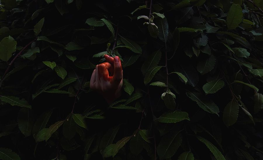 Hand Blood BLOODY Finger Fingers Flowers,Plants & Garden Plants Secret Garden Secret Follow Followme Come With Me Green Darkness At Night In My Garden Nightmare Human Body Part Outside Three Green Green Green!  Greenery On The Way The Street Photographer - 2017 EyeEm Awards The Photojournalist - 2017 EyeEm Awards