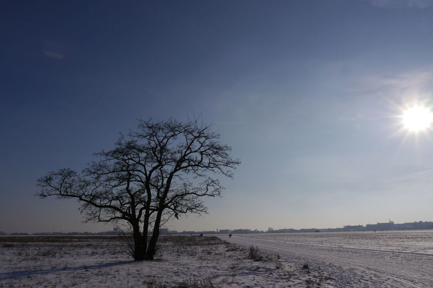 Berlin Tempelhofer Feld Bare Tree Beauty In Nature Branch Day Landscape Lone Nature No People Outdoors Scenics Sky Snowlandscape B Tranquil Scene Tranquility Tree