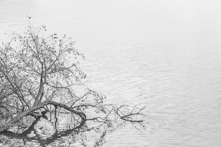 Animal Themes Bare Tree Beauty In Nature Bird Branch Day Lake Nature No People Outdoors Scenics Sky Tranquil Scene Tranquility Tree Water