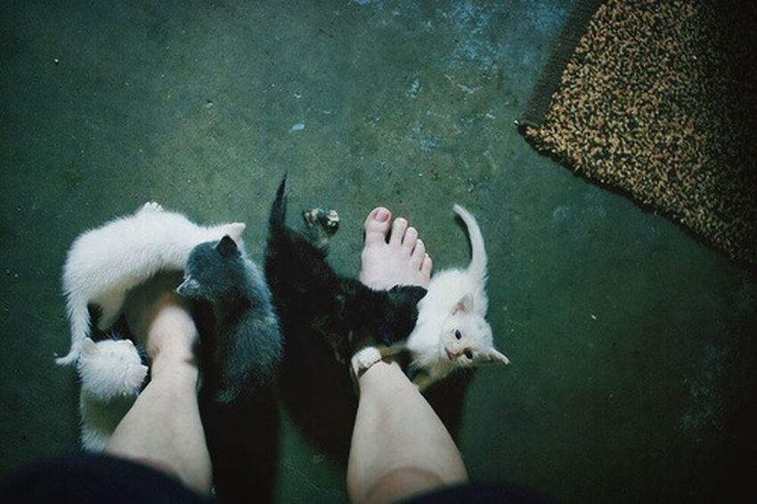 Check This Out Cats Cute Notmine xD