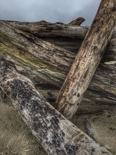 Weathered Textured  Outdoors Nature Wood - Material Backgrounds View Scenic Views Perspective Natural Condition Tranquil Scene Landscape Scenics Sand Cloud - Sky Shore Sky Beach Wood Driftwood Tree Trunk Logs Logs Pile Logsonthebeach