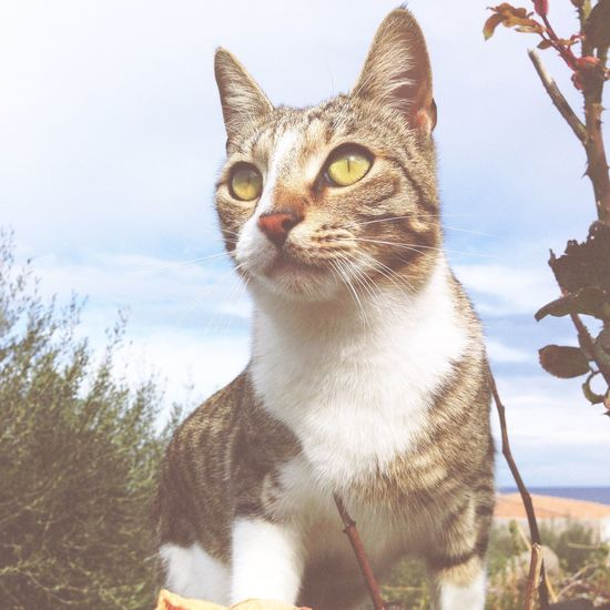 Domestic Cat Pets Domestic Animals Mammal Feline One Animal Animal Themes Whisker No People Nature Tree Portrait Close-up Outdoors Day
