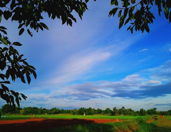sunset clou sky Cloud - Sky Sunset Fammer Plant Tree Beauty In Nature ❤️❤️ Thailand🇹🇭 2018 Day Flower Rural Scene Agriculture Water Landscape Rice - Cereal Plant