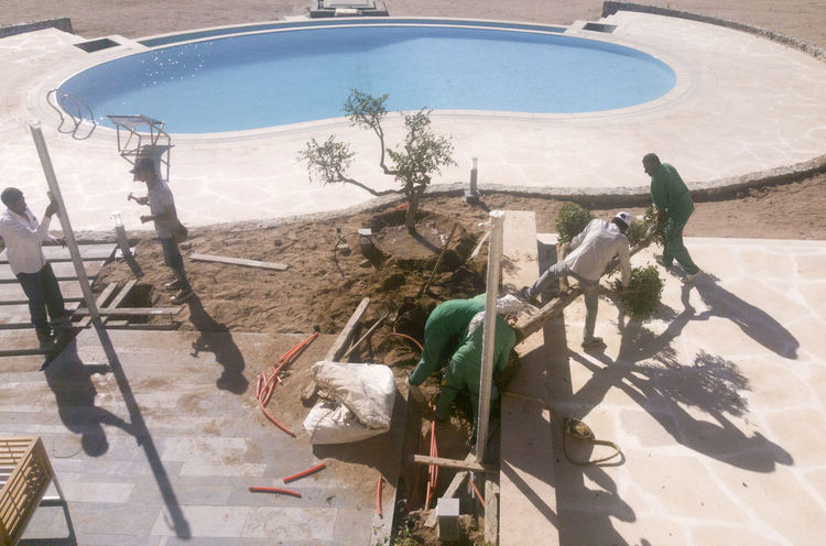 égypte Egypt Swimming Pool Workers Tree