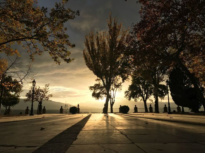 Sunset in Ronda, Spain Magic Silence Mirror Park Light SPAIN Tree Plant Sky Sunset Nature Silhouette Cloud - Sky Beauty In Nature Tranquility Sunlight