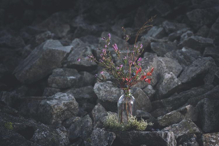 Flowers in vase on rocks
