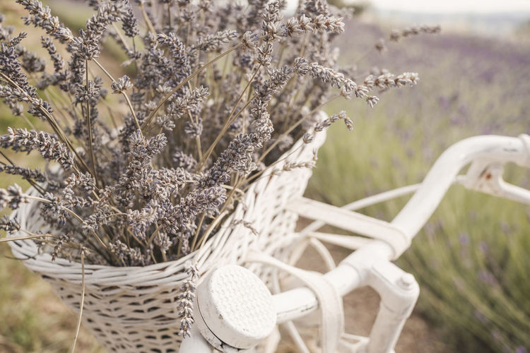 Close-up of flowering plants in basket on field