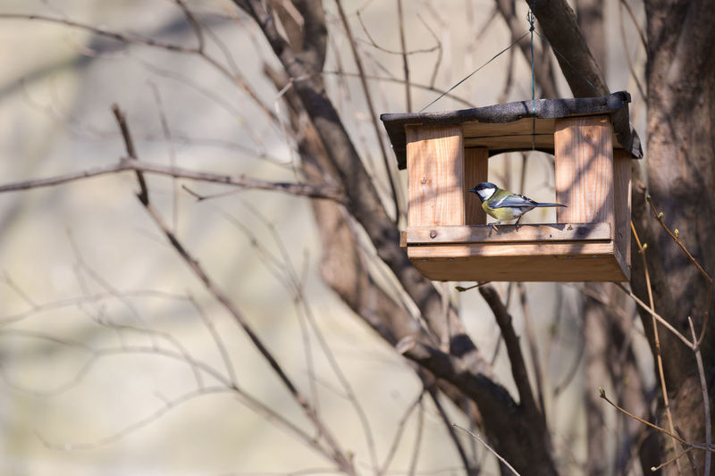 Low angle view of eurasian blue tit perching on birdhouse at bare tree