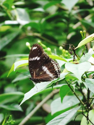 butterfly Full Length Leaf Perching Insect Butterfly - Insect Animal Themes Close-up Plant Butterfly Winged Pollination