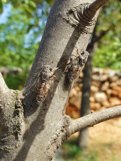 Bark Beauty In Nature Close-up Day Detail Focus On Foreground Freunde Friends Friendship Growth Liebe Natural Pattern Nature No People Outdoors Part Of Partner Selective Focus Strength Tree Tree Trunk Two Is Better Than One Wood - Material Zikade Zikaden